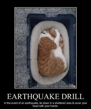 Ihasafunny-funny-pictures-cat-has-earthquake-drill-down