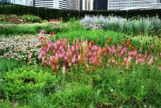 Chicago 2010 024