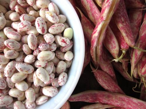 Beans5-500x375
