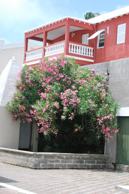 Bermuda 144