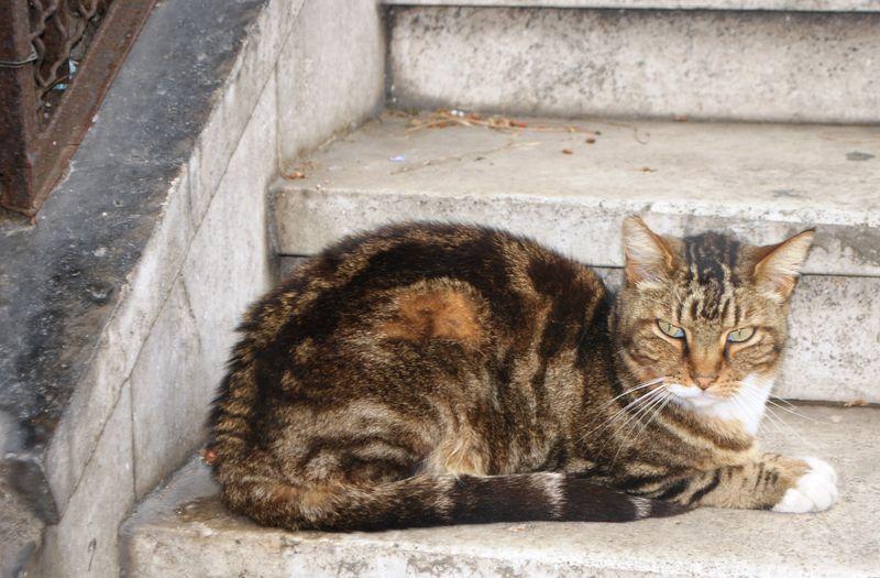 Italy 2010 135