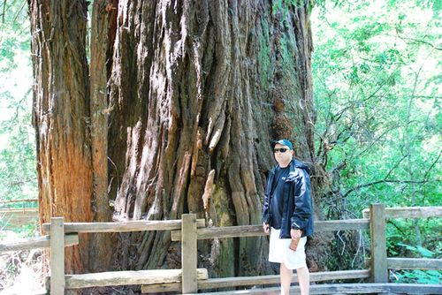 Paul and tree