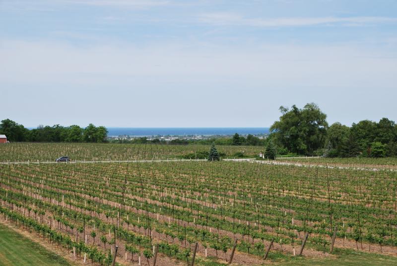 Niagara wine tasting 022