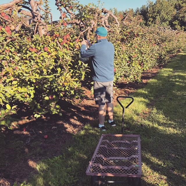 Apple farm 4