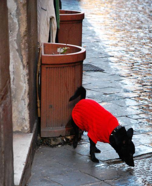 Italy 2012 002