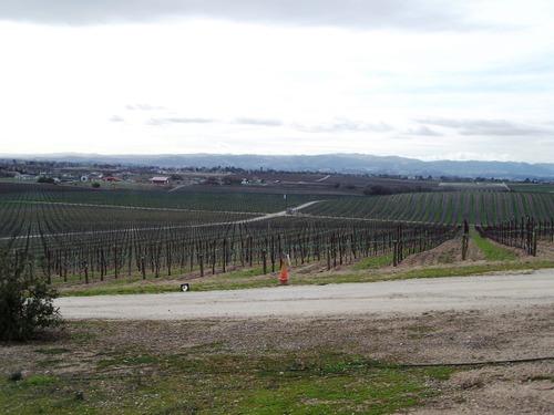 Eastside Vineyards